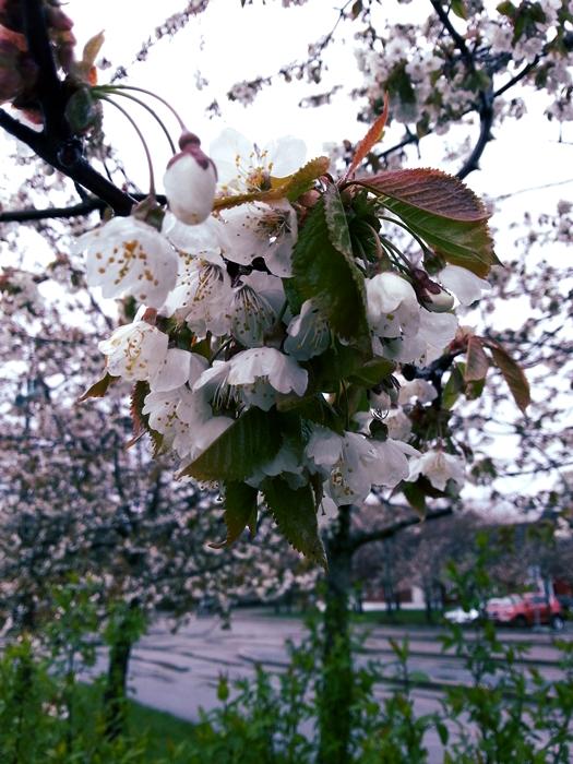 blomstcopyrightatninacg